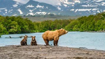 Mehr Natur geht nicht: Wie Bärenjunge vor dem Ertrinken gerettet werden!