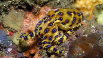 Die 12 gefährlichsten Tiere Australiens